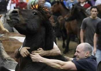 5 советов по укрощению «строптивых» лошадей